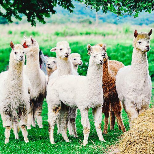 ขอบคุณภาพจาก http://www.siamfreestyle.com/travel-gallery/95