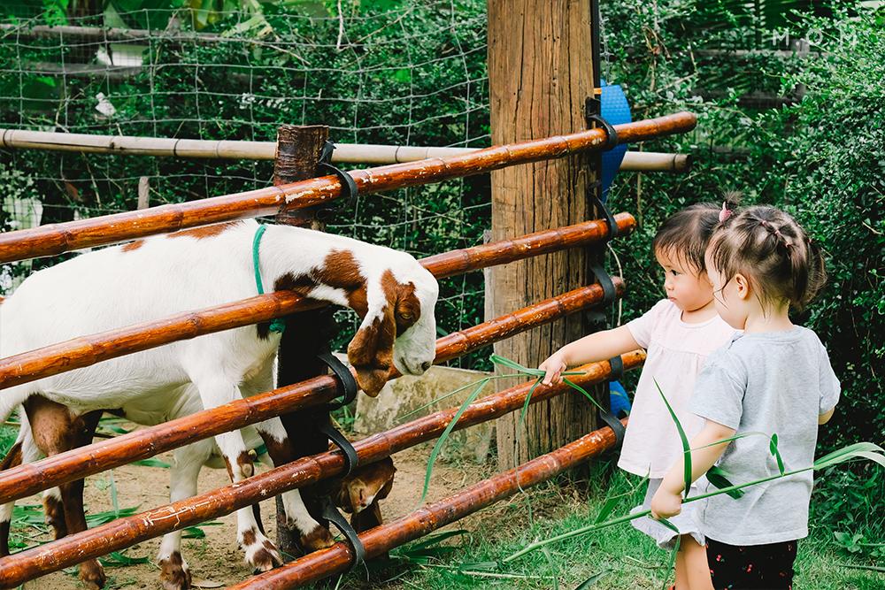 นอกจากนี้เด็กๆ ยังสามารถให้อาหารสัตว์อื่นได้ เช่น ไก่ เป็ด